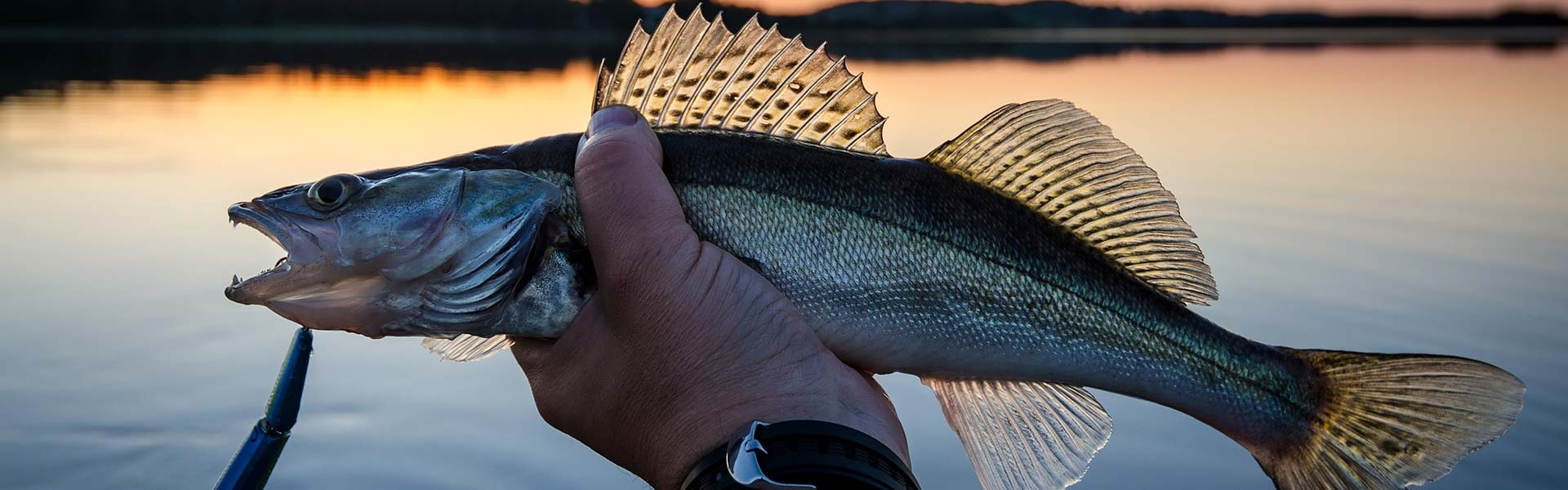 Kansas Walleye Fishing Guides & Lodging