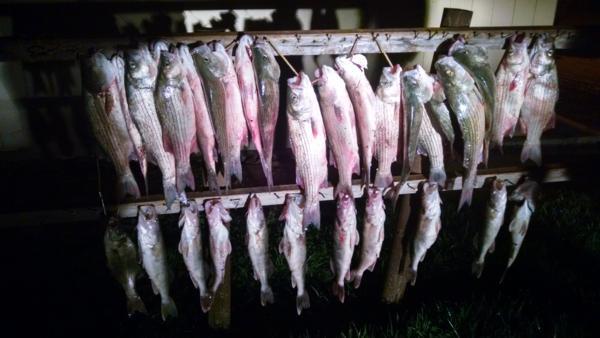 Rader lodge fishing photo 266 for Glen elder fishing report